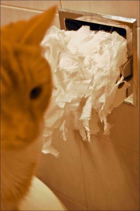 les bêtises des animaux domestiques Animaux-betises-2012928
