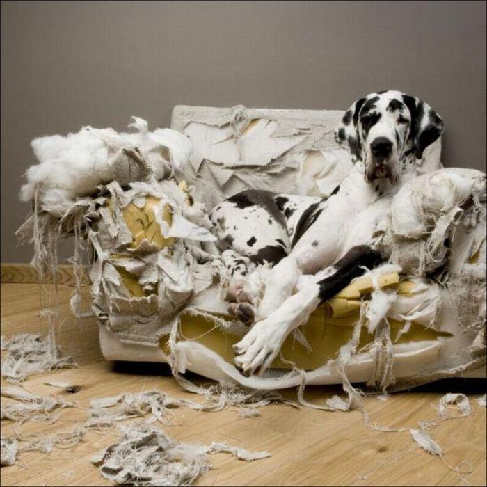 les bêtises des animaux domestiques Animaux-betises-2012931