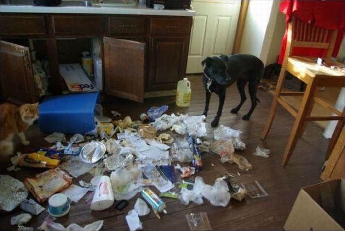 les bêtises des animaux domestiques Animaux-betises-2012932