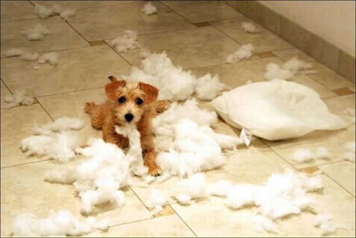 les bêtises des animaux domestiques Animaux-betises-2012934