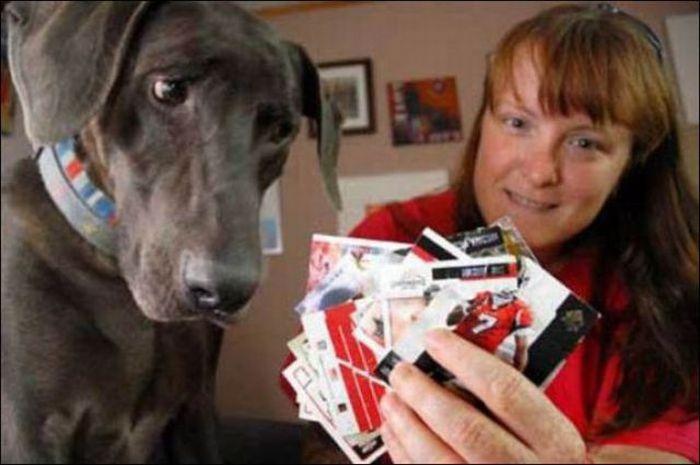 les bêtises des animaux domestiques Animaux-betises-201295