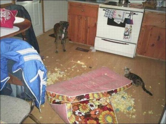 les bêtises des animaux domestiques Animaux-betises-201296