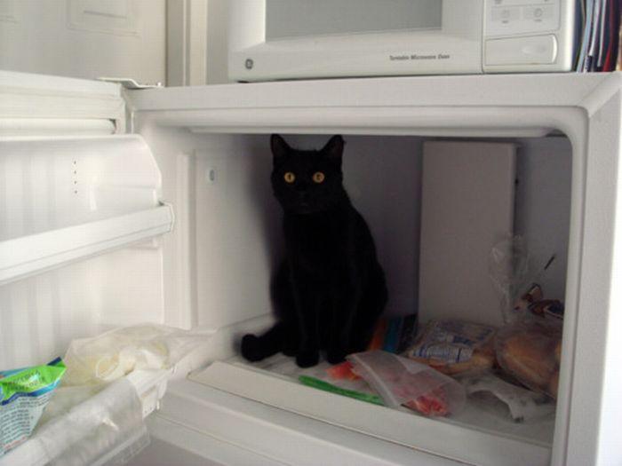 Les bêtises des chats Chats-diaboliques-24685