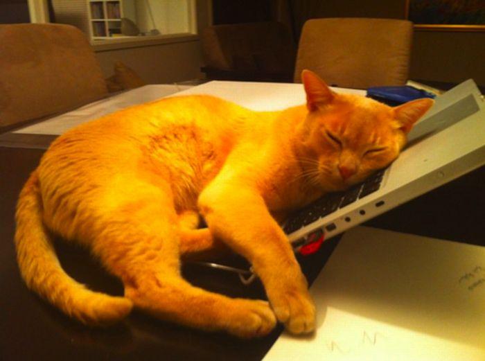 Les bêtises des chats Chats-diaboliques-246851