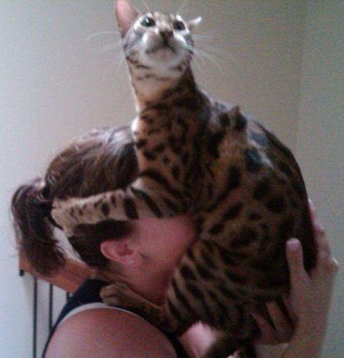 Les bêtises des chats Chats-diaboliques-2468513