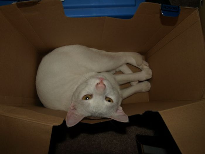 Les bêtises des chats Chats-diaboliques-2468514