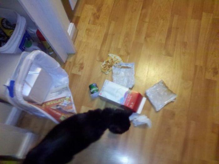 Les bêtises des chats Chats-diaboliques-2468515