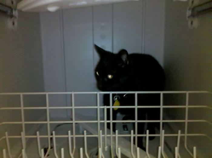Les bêtises des chats Chats-diaboliques-2468516