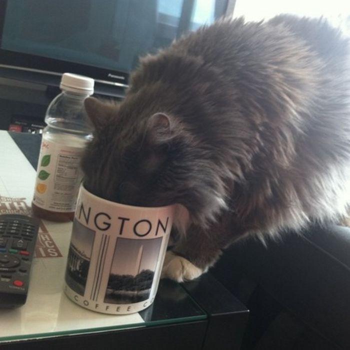 Les bêtises des chats Chats-diaboliques-2468517