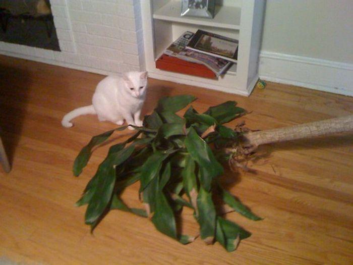 Les bêtises des chats Chats-diaboliques-2468518