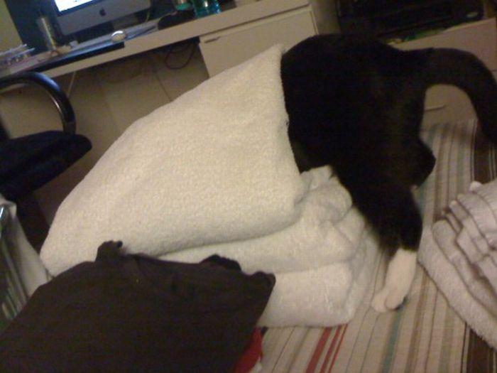Les bêtises des chats Chats-diaboliques-246852