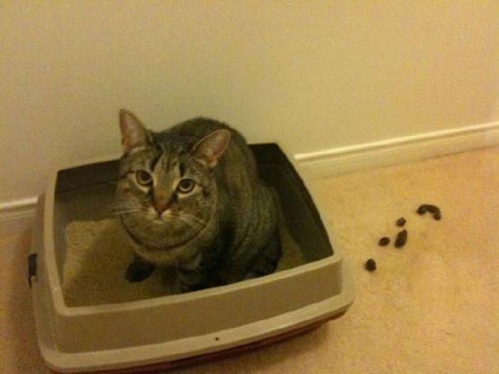 Les bêtises des chats Chats-diaboliques-2468524