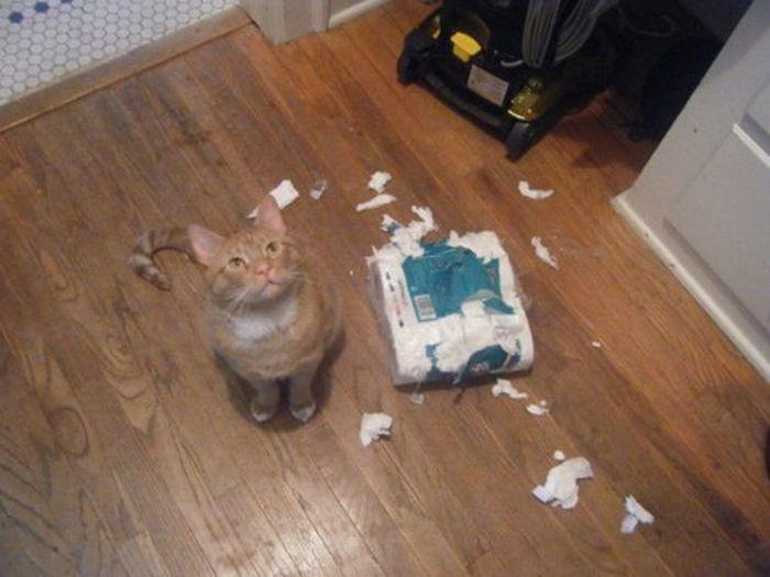 Les bêtises des chats Chats-diaboliques-2468529