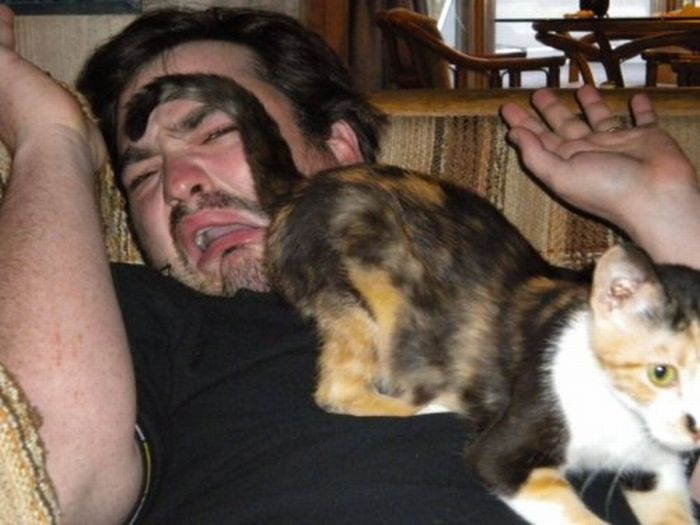 Les bêtises des chats Chats-diaboliques-246853