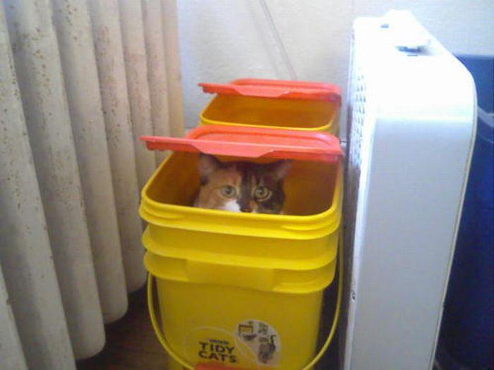 Les bêtises des chats Chats-diaboliques-2468531