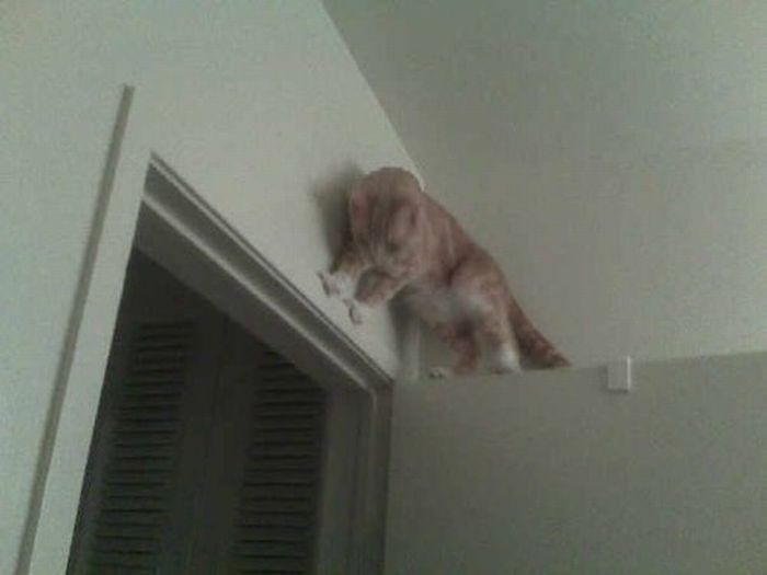 Les bêtises des chats Chats-diaboliques-2468533