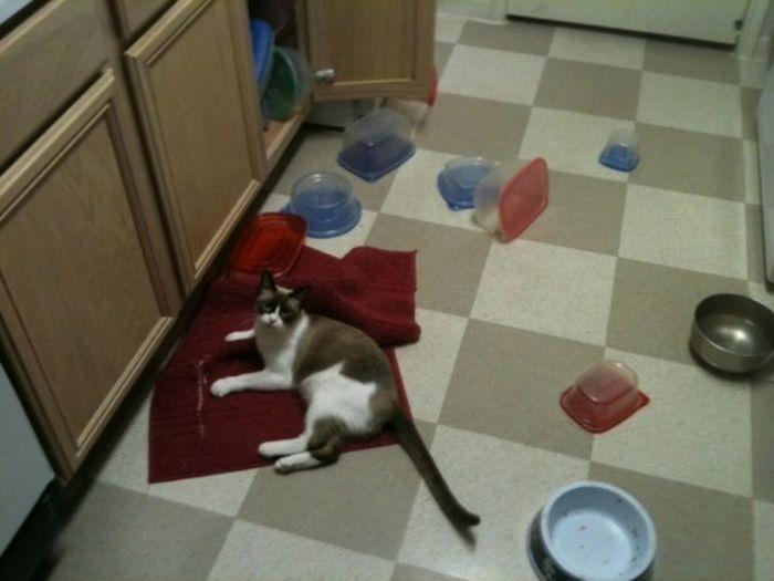 Les bêtises des chats Chats-diaboliques-2468534