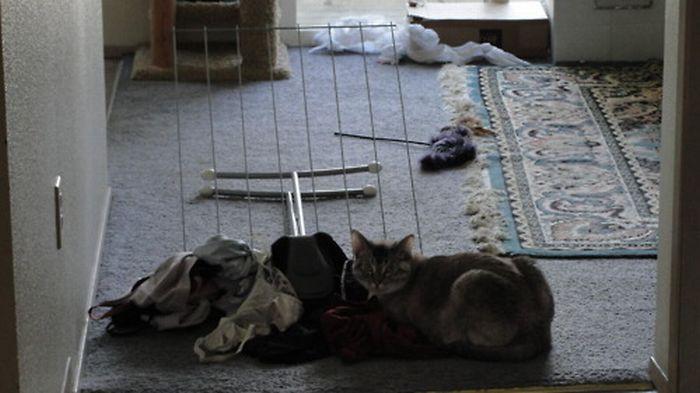 Les bêtises des chats Chats-diaboliques-2468536