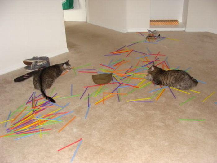 Les bêtises des chats Chats-diaboliques-2468538