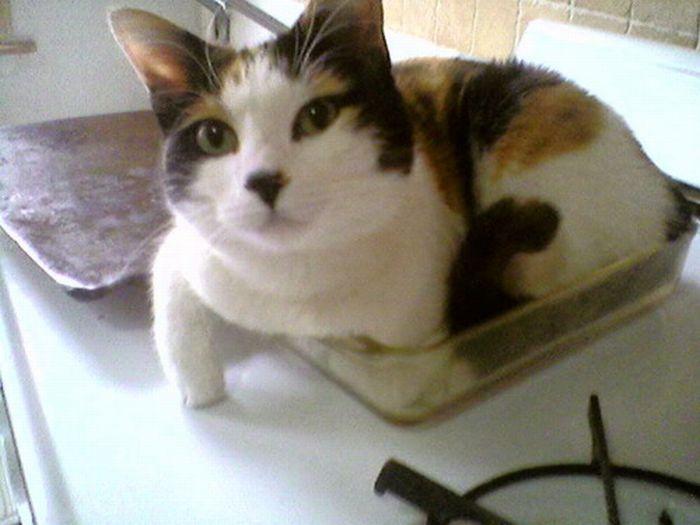 Les bêtises des chats Chats-diaboliques-2468540