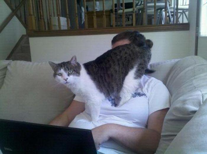 Les bêtises des chats Chats-diaboliques-2468542