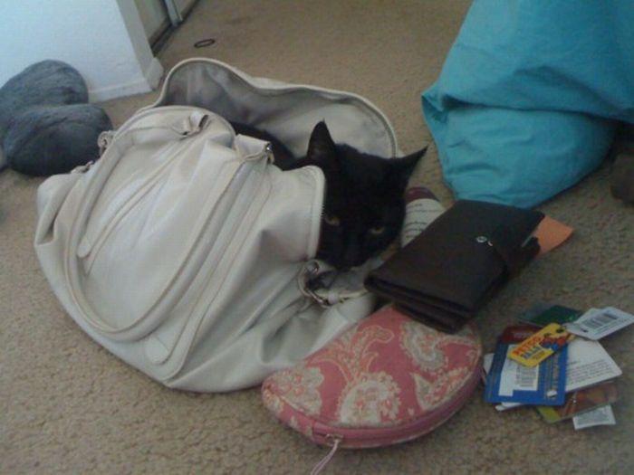 Les bêtises des chats Chats-diaboliques-2468544
