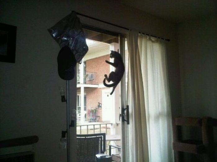 Les bêtises des chats Chats-diaboliques-2468545
