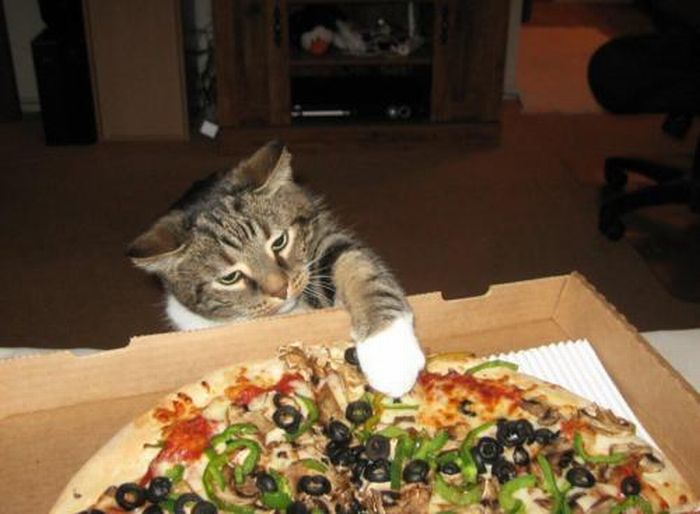 Les bêtises des chats Chats-diaboliques-2468548