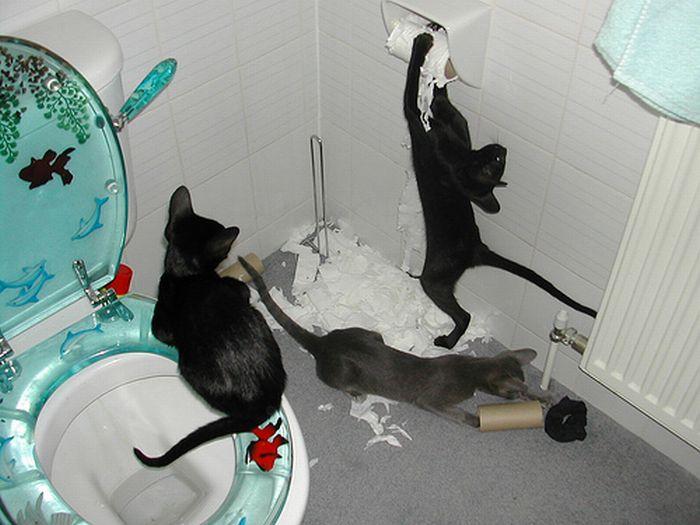 Les bêtises des chats Chats-diaboliques-246855