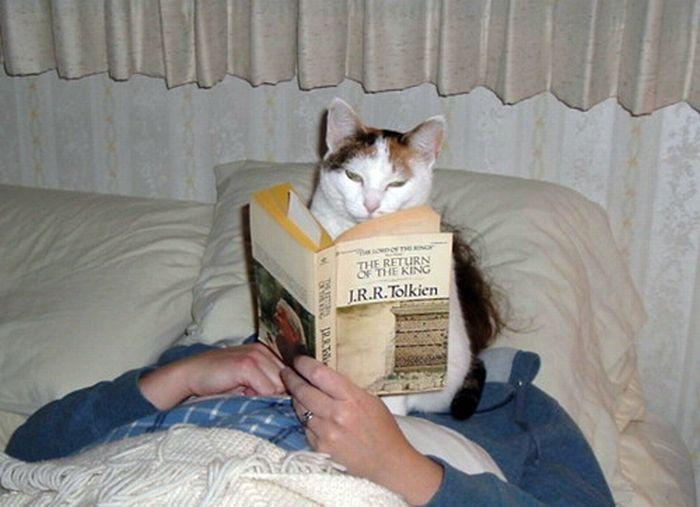 Les bêtises des chats Chats-diaboliques-2468550