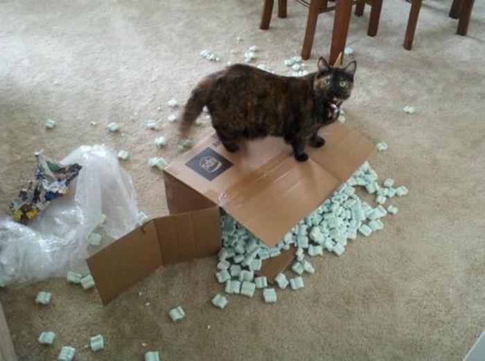Les bêtises des chats Chats-diaboliques-2468553