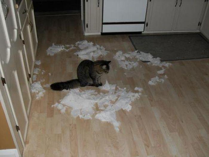 Les bêtises des chats Chats-diaboliques-2468554