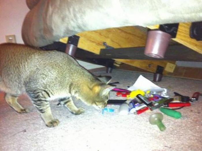 Les bêtises des chats Chats-diaboliques-2468556