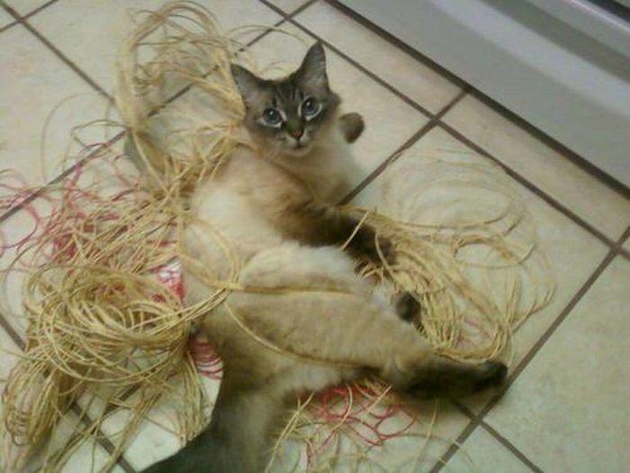 Les bêtises des chats Chats-diaboliques-2468558