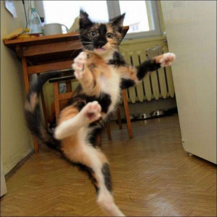 Les bêtises des chats Chats-diaboliques-246856