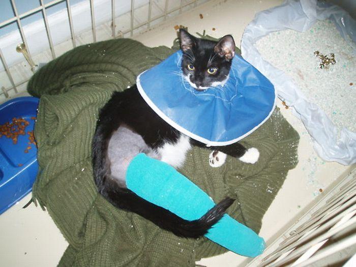 Les bêtises des chats Chats-diaboliques-2468561