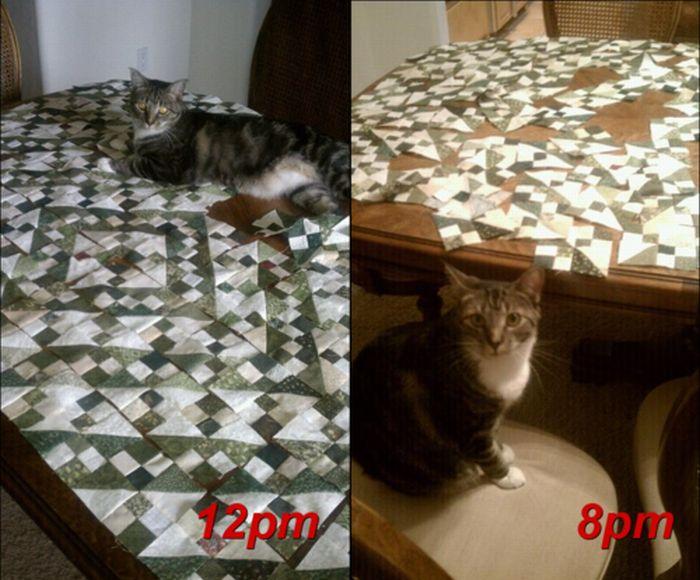 Les bêtises des chats Chats-diaboliques-2468562
