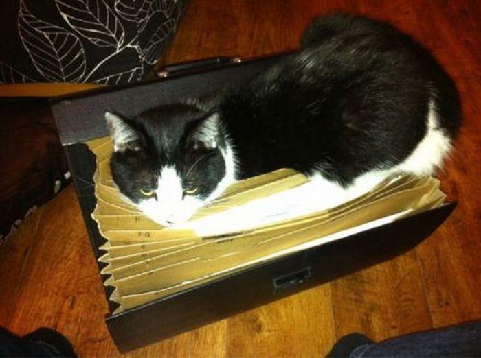 Les bêtises des chats Chats-diaboliques-2468563