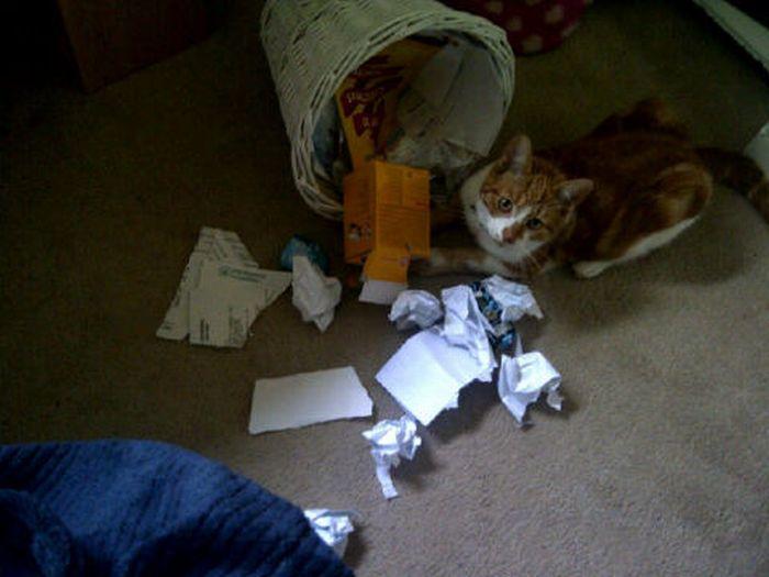 Les bêtises des chats Chats-diaboliques-2468566