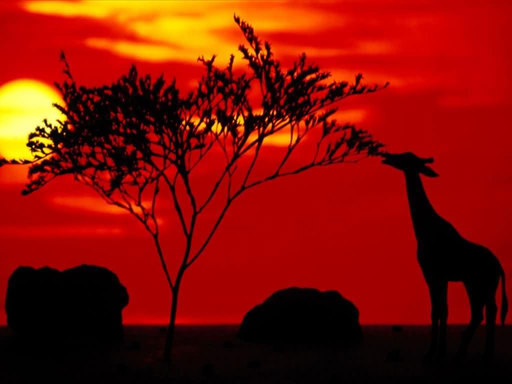 Zalazak sunca-Nebo - Page 8 1dacb10f0623c67cb7dbb37587d8b38a