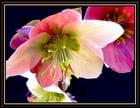 Góc kỷ niệm ... - Page 2 Autres-fleurs-sangatte-france-1220803399-1363680