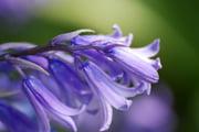 Góc kỷ niệm ... - Page 2 Autres-fleurs-france-9442865253-961440