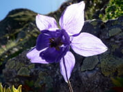 Góc kỷ niệm ... Autres-fleurs-grenoble-france-1117088563-1084724