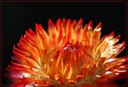 Góc kỷ niệm ... - Page 3 Autres-fleurs-marly-france-1236558549-1229632