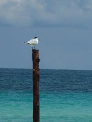recherche - Page 3 Autres-mers-et-plages-cuba-1343772545-1189765