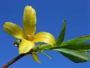 Góc kỷ niệm ... - Page 2 Compositions-florales-autres-fleurs-longchaumois-france-2562066913-953877