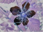 Góc kỷ niệm ... - Page 2 Creations-numeriques-compositions-florales-autres-fleurs-espalion-france-7476617694-958185