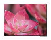 Góc kỷ niệm ... - Page 2 Plantes-grasses-france-1757599632-1452615
