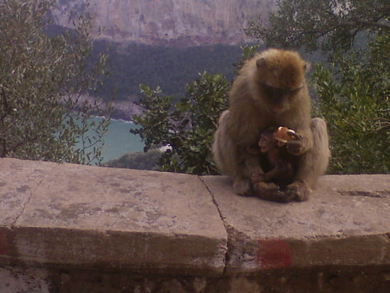 لؤلؤة المتوسط Autres-animaux-bejaia-algerie-1263938811-1392059