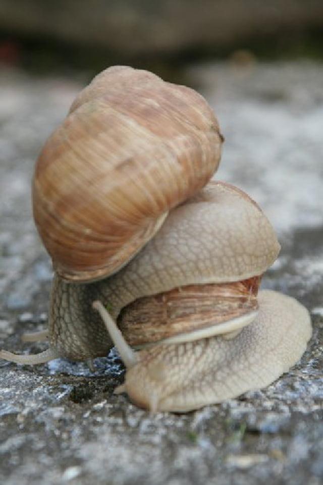 Les escargots 1326407